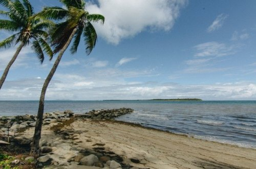 beach with coconut tree