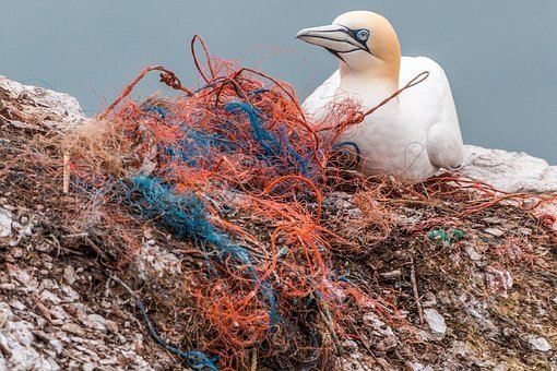 red de pesca y un pájaro