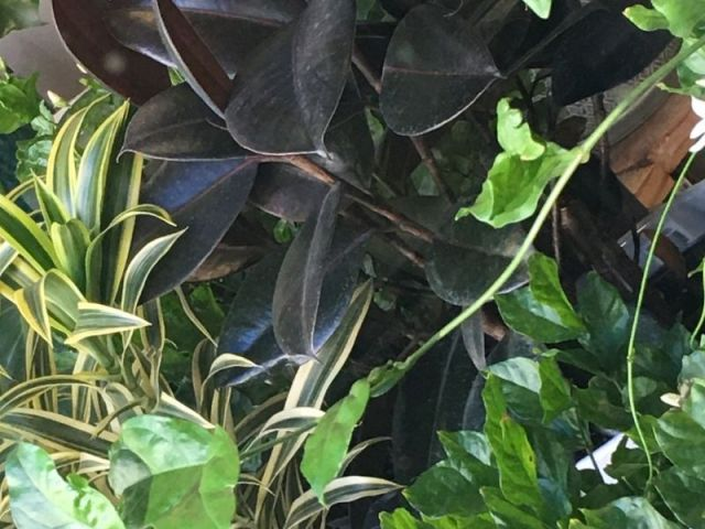 black and green plant leaves