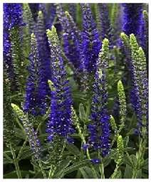 Perennial Cutflower Garden Design