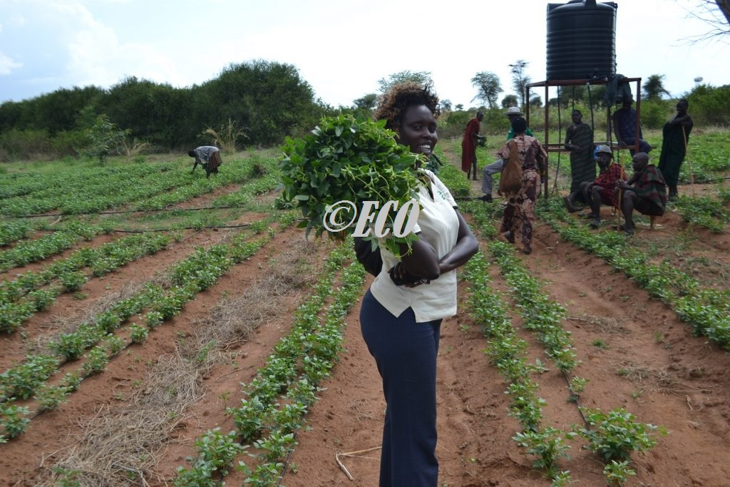 eco-field-staff-show-vegetables-bought-from-the-irrigation-garden-supported-by-partners-for-resilience-project-in-nabilatuk-sub-county-1024x683