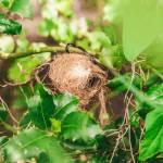Dwergmuiskunstnest, gemaakt uit lariks. Deze nestkast is op maat gemaakt voor de dwergmuis.