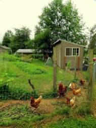 121-Alderleaf-chicken-house-after-1