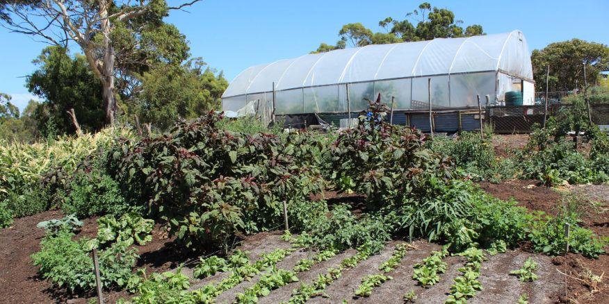 permaculture-market-garden-neil-robertson-8283