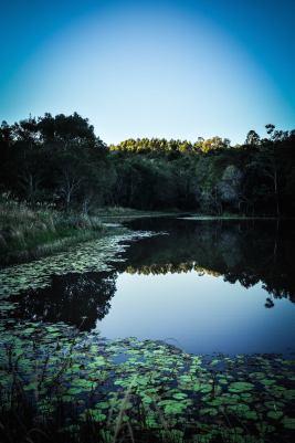 Lagoon early
