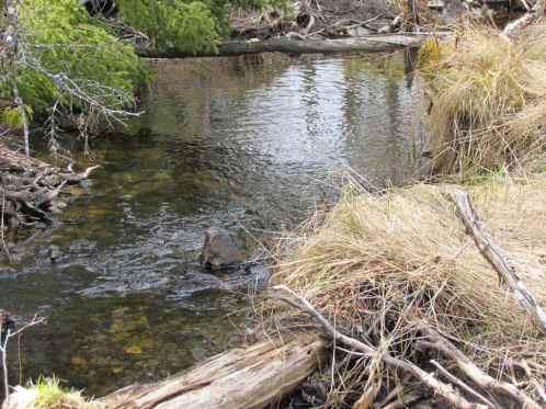 Cape-Breton-Eco-Village-Stream