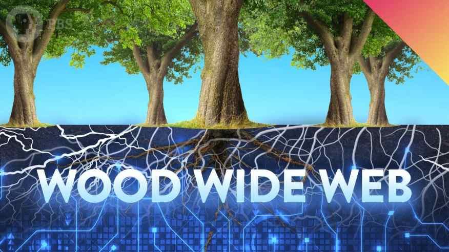 woodwideweb