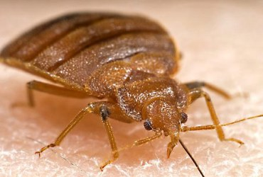 How to Avoid Bringing Bedbugs Home from Vacation