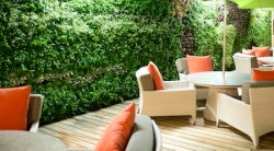 Cruise line grows eco-friendly living green wall, aboard Crystal Symphony