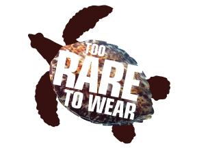 endangered hawksbill turtle