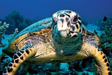Avoid Buying Turtleshell Souvenirs