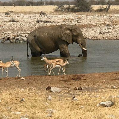 Etosha National Park (C) Evelyn Kanter