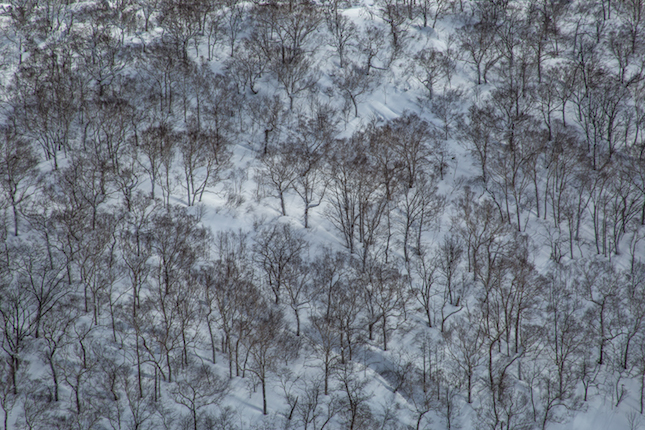 bosque. Foto alvaro zurita
