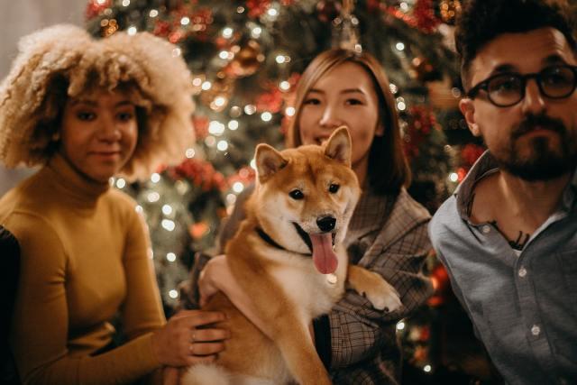 Σκύλος, Χριστούγεννα