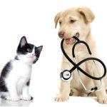 Заставка для - Помощь кошкам и собакам