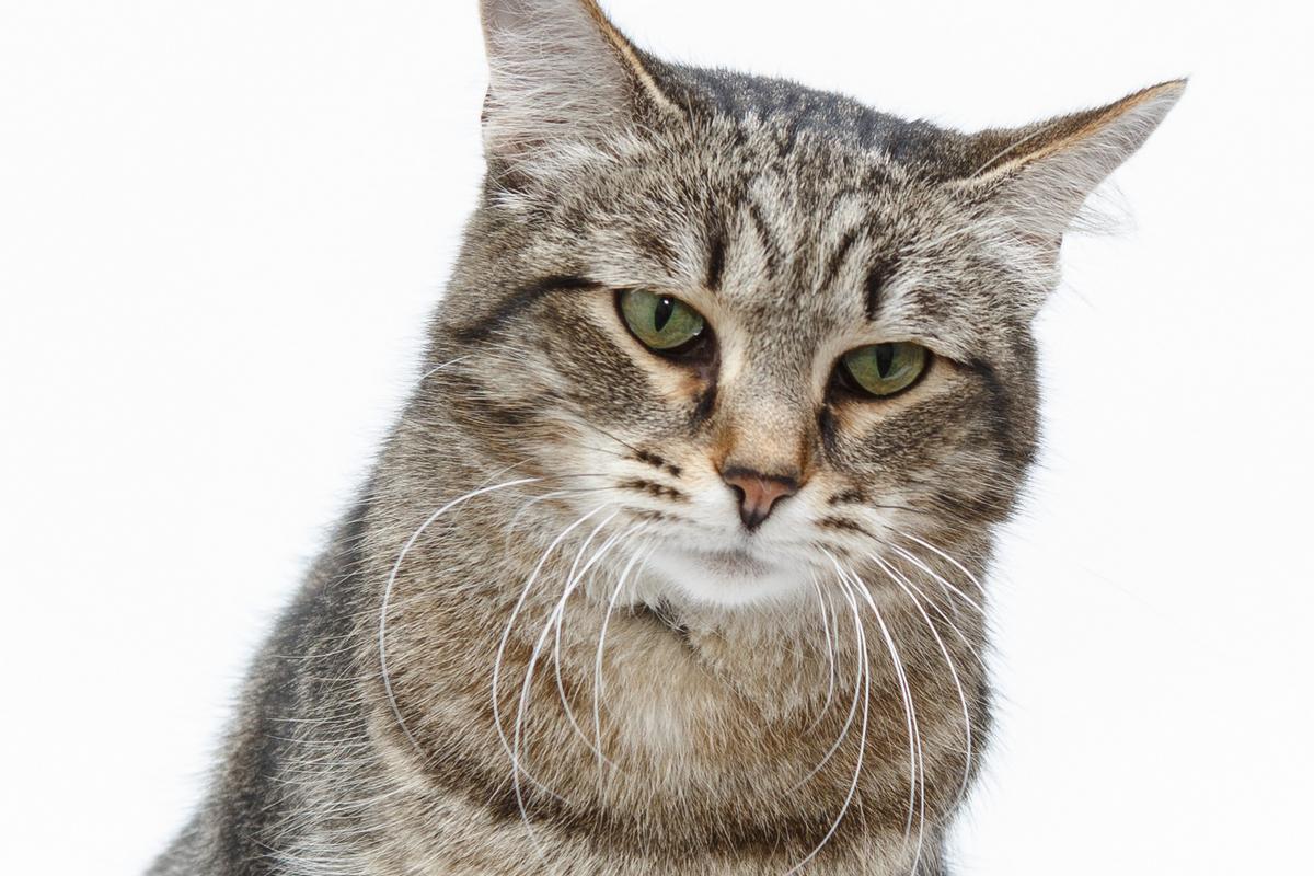 Приют кошек