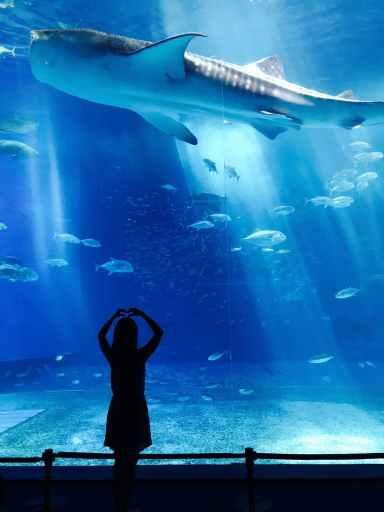 child looking at shark in aquarium