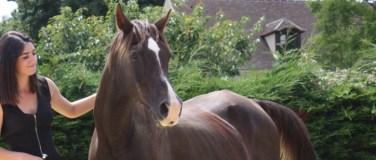 Écrin de Liberté centre de bien être guidé par le cheval