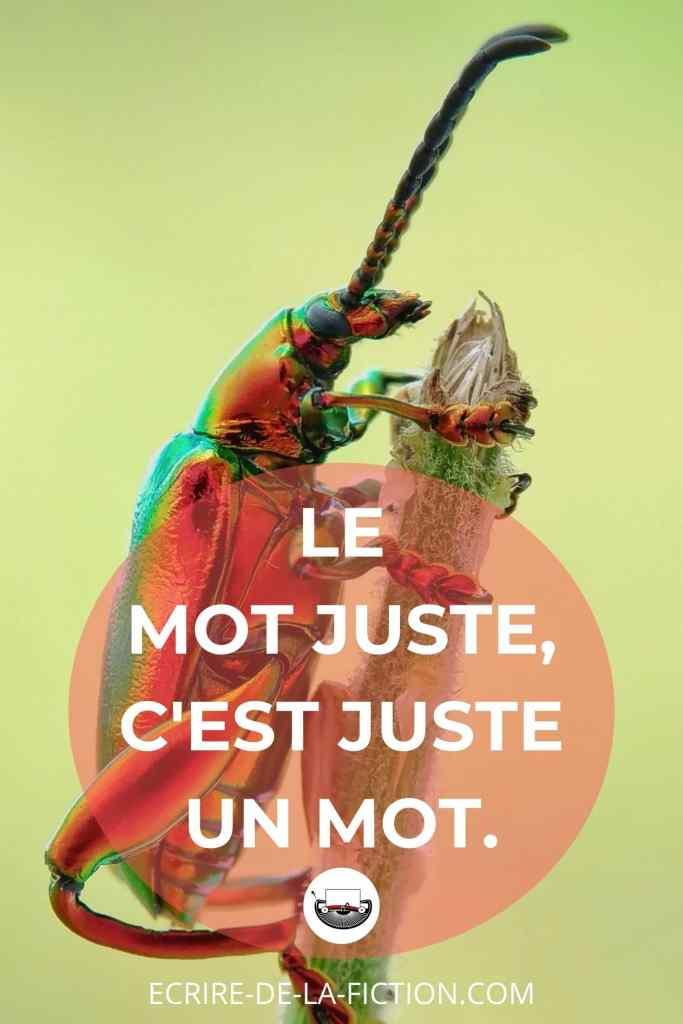 branche-scarabee-slogan-du-blog-formation-ecriture