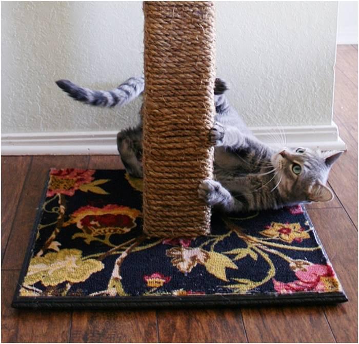 Cara Membuat Mainan Kucing Mudah dan Praktis  Tokopedia Blog
