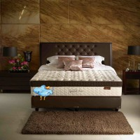 Lady Americana Spinal Care 200 x 200 (Kasur Saja / Mattress Only)