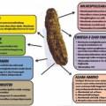 Herbal Alami Gamat Hpai Extrak Teripang Emas Obat Asam Urat,Batu