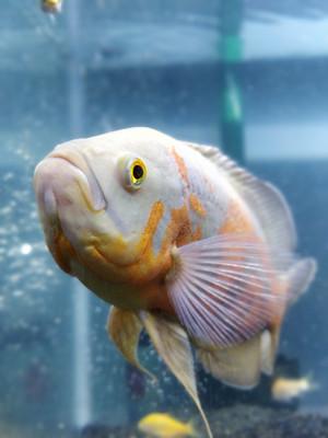 Berawal Hobi, Pria Ini Raup Untung Besar dari Jual Ikan