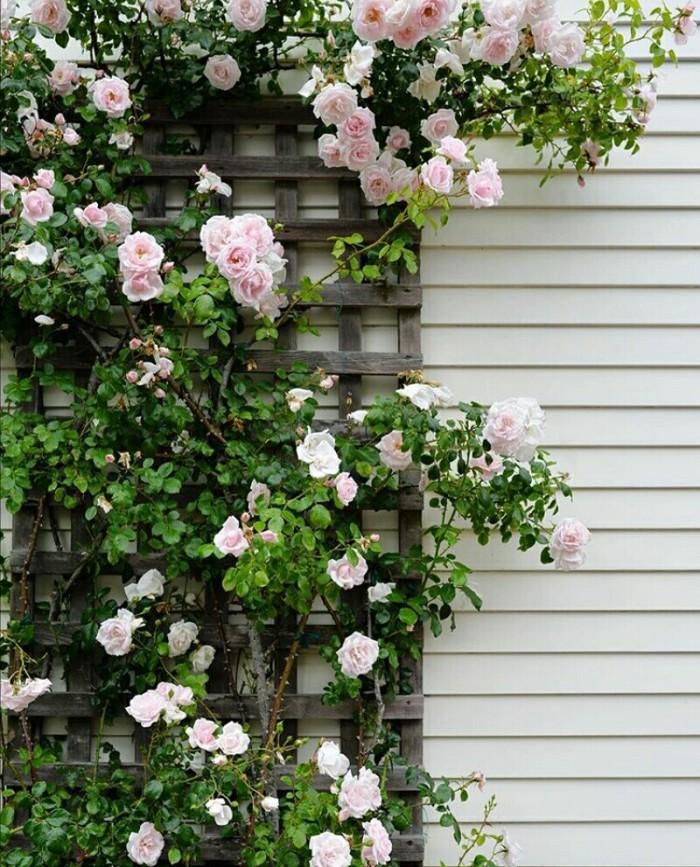 Jual Tanaman Hidup Climbing Pink Rose Rose Climbing Mawar Rambat Kota Batu Youniqe Garden Tokopedia