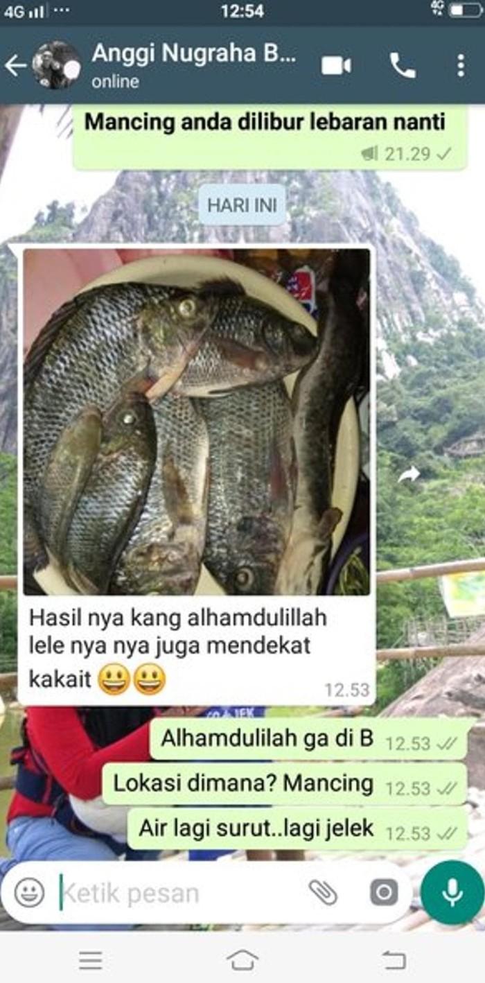 Umpan Ikan Mujair Babon : umpan, mujair, babon, Umpan, Mujair, Liar,, Mancing, Pelet, Cacing, Spesial, Tangerang, Tokopedia, Online