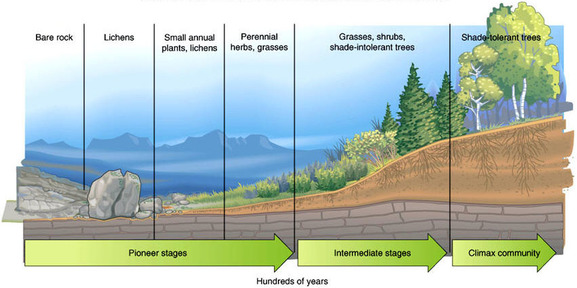 Primary succession also lesson ecs living environment rh ecslivingenvironment weebly