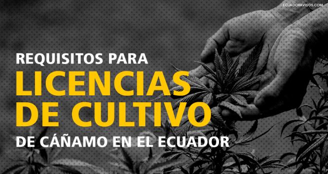 licencias-cultivo-cañamo-ecuador-cannabis