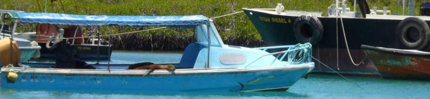 Lobo marino en barco.