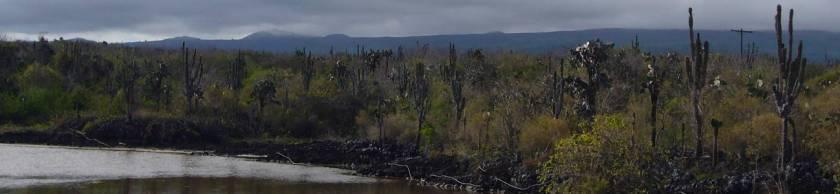 Cactus en la zona costera.