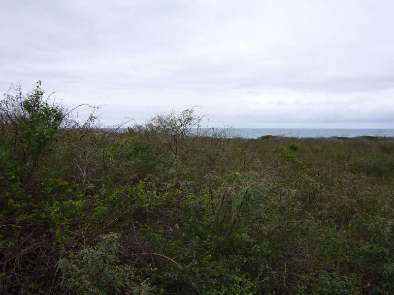 Vegetación zona costera de las islas Galápagos.