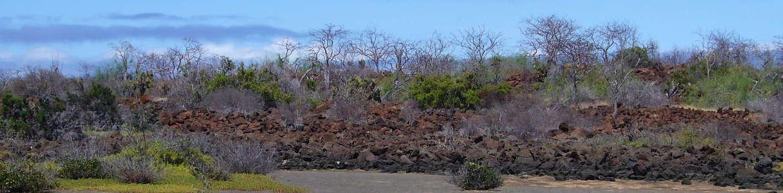Zona árida de Galápagos.