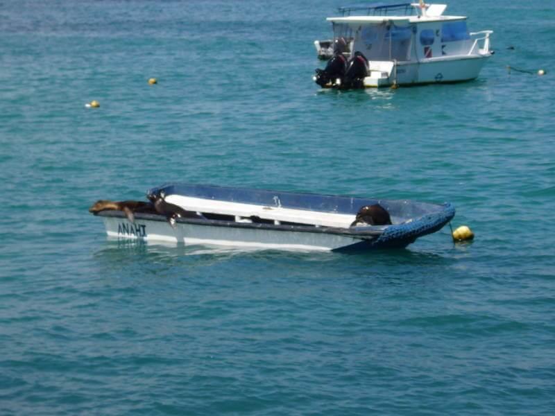 Barco con lobos marinos.