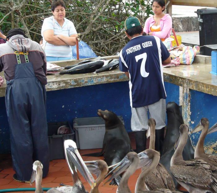 Muelle del pescador en Puerto Ayora.