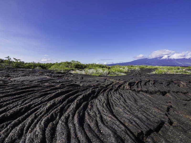 Campo de lava en la Punta Moreno, isla Isabela.