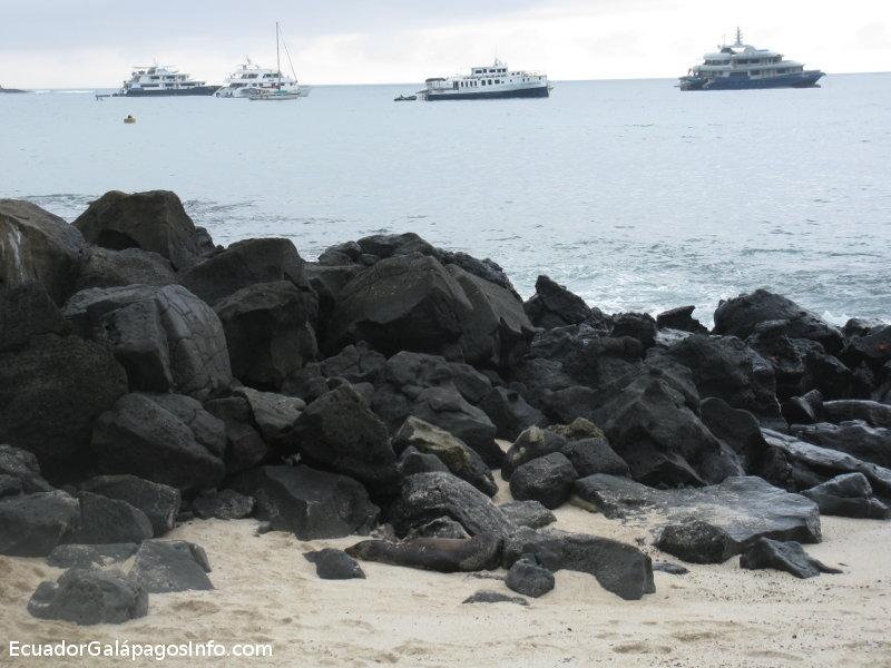 Lobo marinomarinos en las rocas, en el fondo barcos.