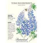Botanical Interest – Texas Bluebonnet