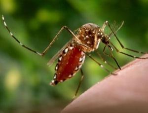 COGHLANS(コフラン) D.W.モスキートネット D.W Mosquito Net 蚊帳 ダブルサイズ -グリーン-