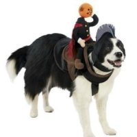 Amazon.com : Headless Horseman Dog Costume Size: X-Large ...