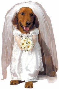 Amazon.com: Pet Wedding Bride Dog Costume (Size: Small ...