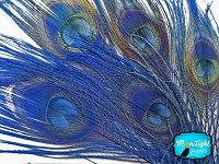 Moonlight Feather , Peacock Feathers ; Navy Blue Peacock Feathers; Bleached 5 Pieces Per Pack