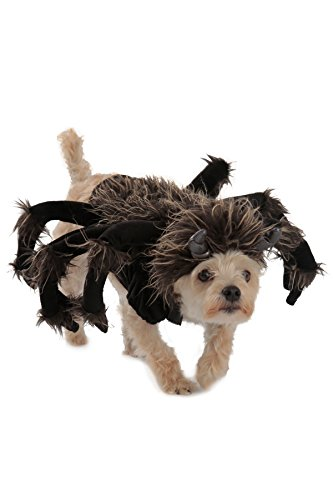 spider costumes dachshunds