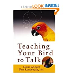 teach your quaker parrot to talk