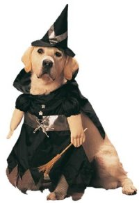 Amazon.com: Pet Witch Dog Halloween Costume (Size: Medium ...