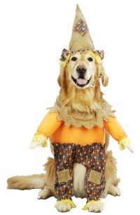 Wizard of Oz Costume: Fun Family and Group Costumes
