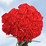 Cheap Red Carnations | 200 Red Carnations