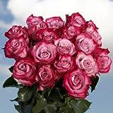 Beautiful Fresh Purple Roses | 50 Purple Roses